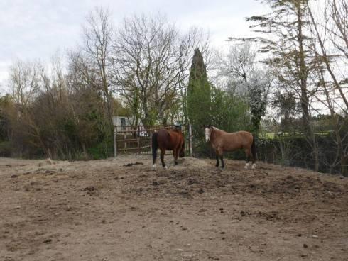 Ferme Bastide avec 8 hectares de prairie Viager Occupé Entraigues sur la Sorgue.