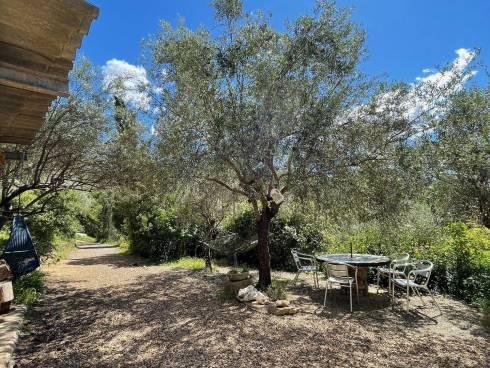 Mas en Pierre sur 1 hectare de terrain avec 300 oliviers